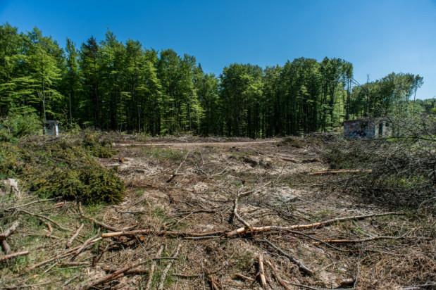 1827441-Wycinka-objela-kilkaset-drzew-Teren-przynalezy-do-Trojmiejskiego-Parku