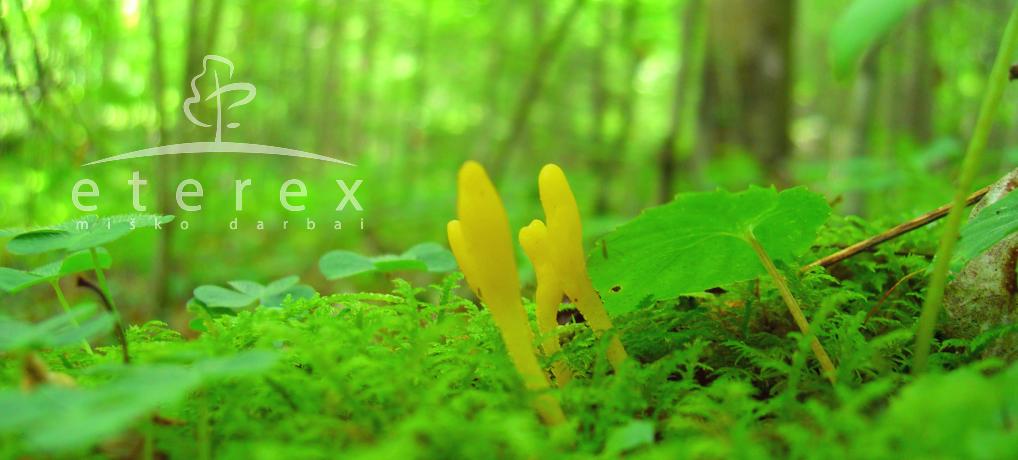 Eterex – apleistų sklypų valymo darbai